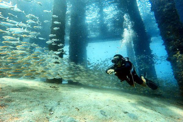 Diving Around Juara Jetty
