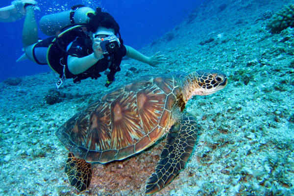 Diving with Sea Turtle at Tioman Island