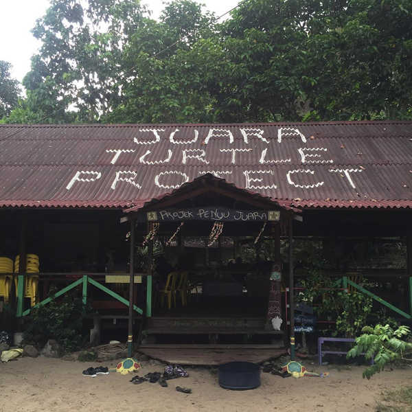 Juara Turtle Project at Tioman Island