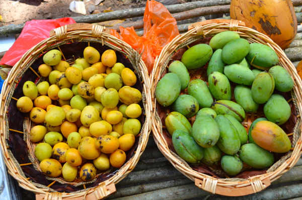 Mangoes At Mukut Tioman
