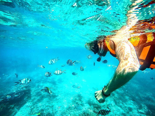 Snorkeling With Fishes